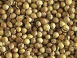 Coriander, flax, sainfoin, brewing barley, millet, pea beans - photo 2