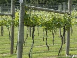 Столбы виноградные. Шпалеры садовые
