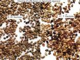 Grain Cleaning Aerodynamic Separator - photo 6