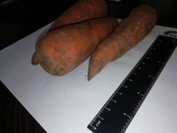 Ich werde Karotten Großhandel Kasachstan verkaufen - photo 2