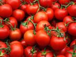 Продам помидоры из Египта экспорт, купить оптом доставка - photo 1