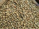 Robusta Coffee Beans - photo 2